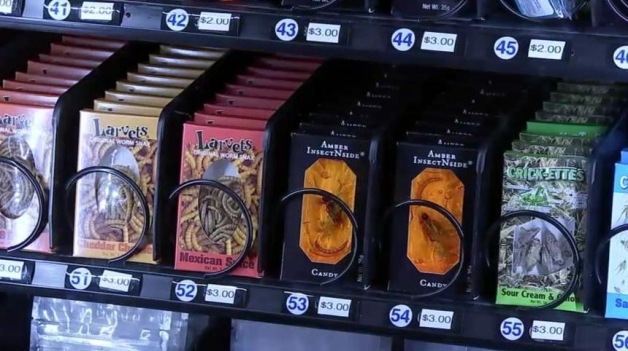 Houston-museum-adds-to-gross-income-with-insect-vending-machine